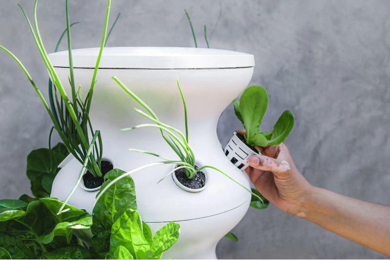 Grow Your Own Food Lettuce Grow Eco-Frienldy Home Kit
